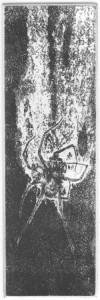 Fabien Yvon gravure chutes de fossiles 4