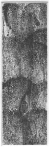 Fabien Yvon gravure chutes de fossiles 5