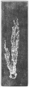 Fabien Yvon gravure chutes de fossiles 7